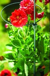 """175 cm (70"""") Plant Support Stake"""