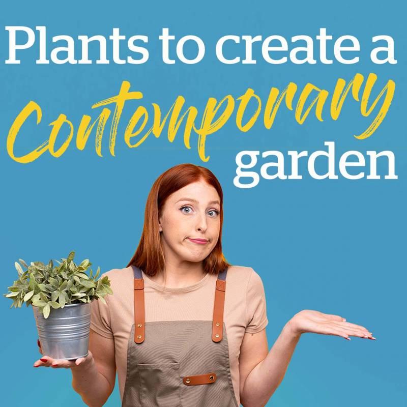 Plants to create a contemporary garden