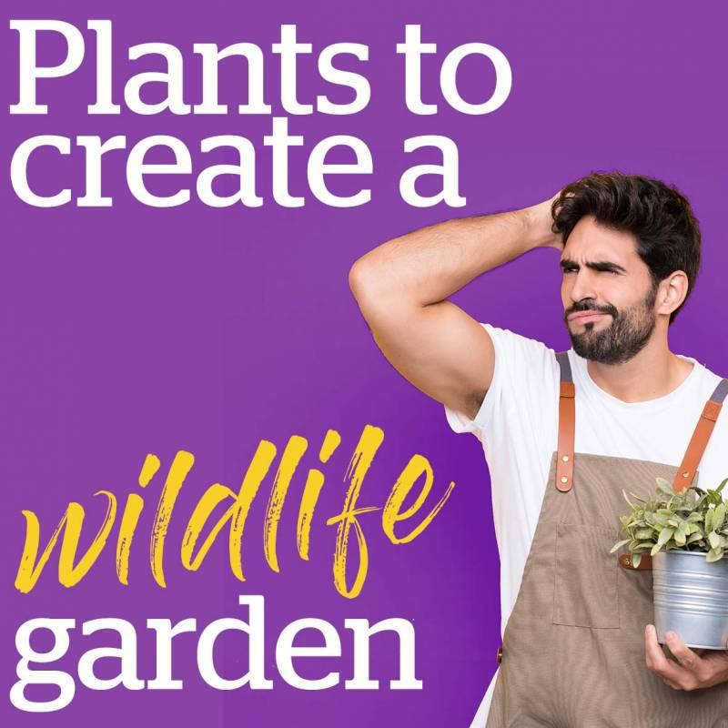 Plants to create a wildlife garden
