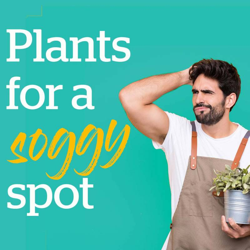 Plants for a soggy spot
