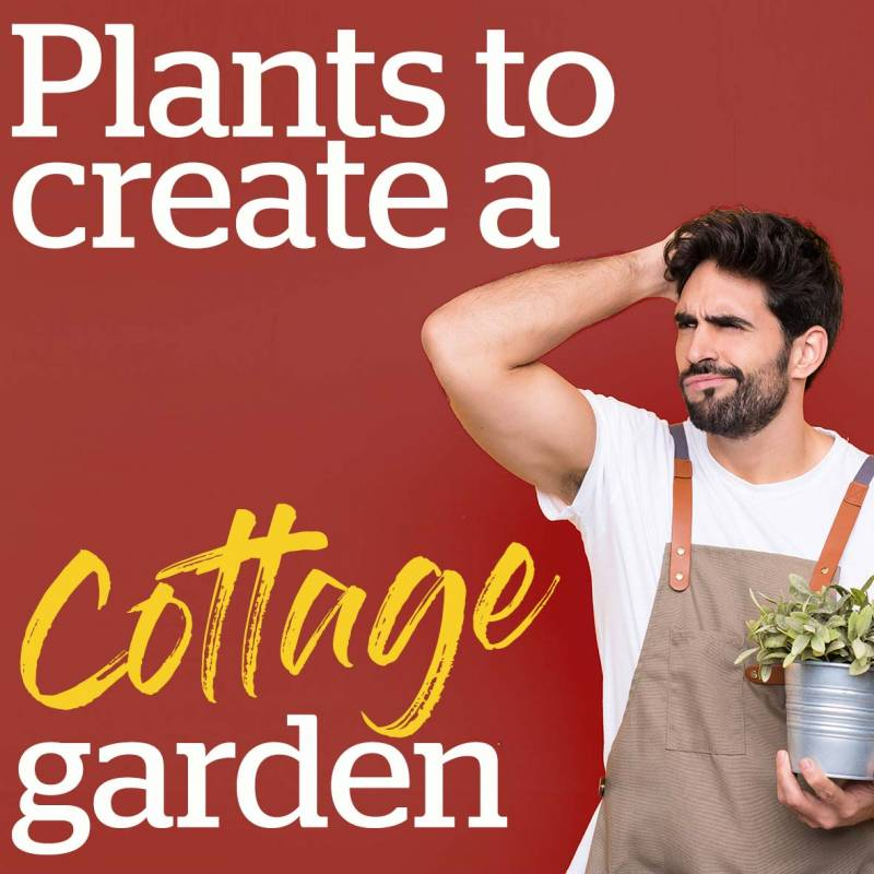 Plants to create a cottage garden