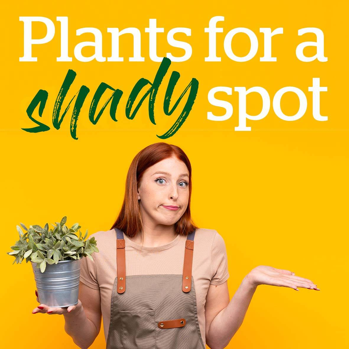 Plants for a shady spot